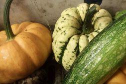 Kürbisse & Zucchini