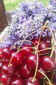 Sauerkirschen & Lavendel